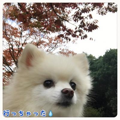 201611141238253d4.jpg