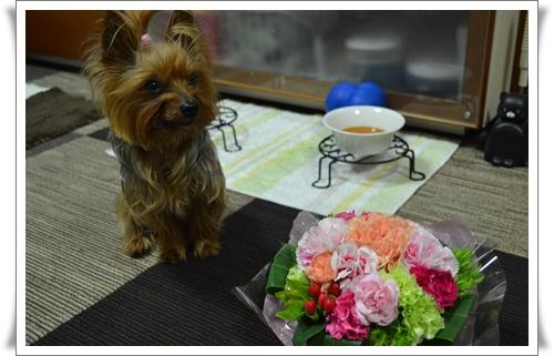 お嫁ちゃんからDSC_0193-20160509