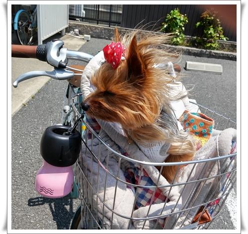 東京IMG00036_HDR-20160521