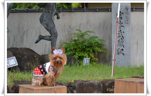 るきの運動会DSC_0424-20160605