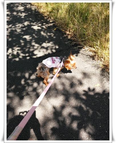 お散歩(6月21日)IMG00241_HDR-20160621
