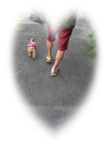 朝散歩IMG00440_HDR-20160813