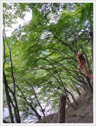 香嵐渓IMG00524_HDR-20160828