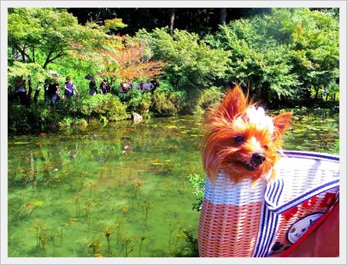 モネの池IMGP4728-20160910
