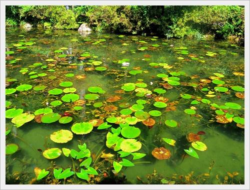 モネの池IMGP4729-20160910
