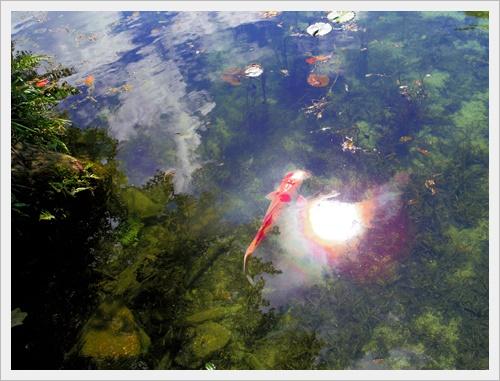 モネの池IMGP4731-20160910