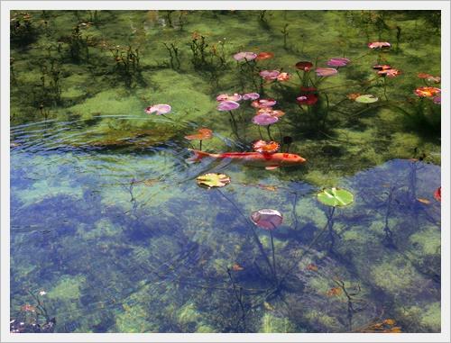モネの池IMGP4732-20160910