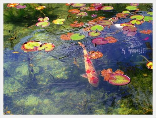 モネの池IMGP4733-20160910