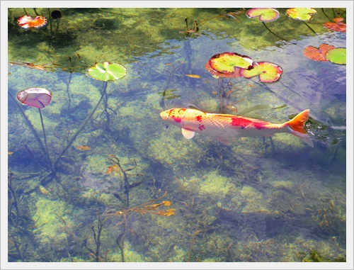 モネの池IMGP4734-20160910