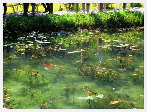 モネの池IMGP4735-20160910