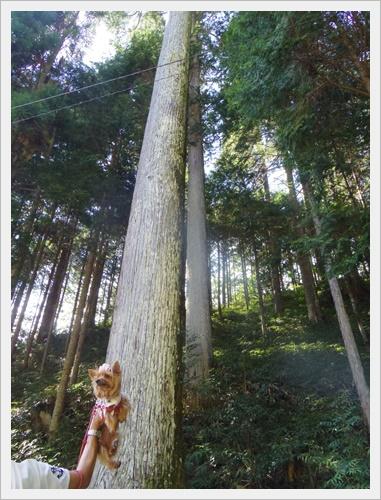 大樹IMGP4737-20160910