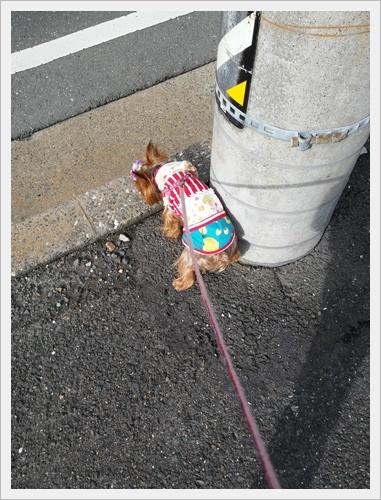 散歩IMG00027-20161004