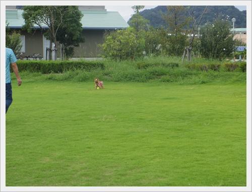 パピーちゃんはIMGP4852-20120121