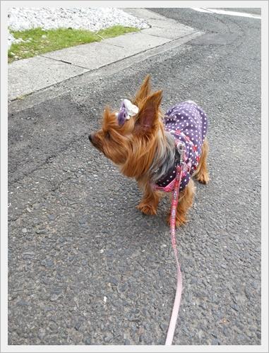 散歩IMG00047-20161010