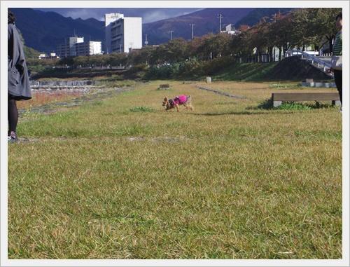 東北旅行IMGP4978-20120102