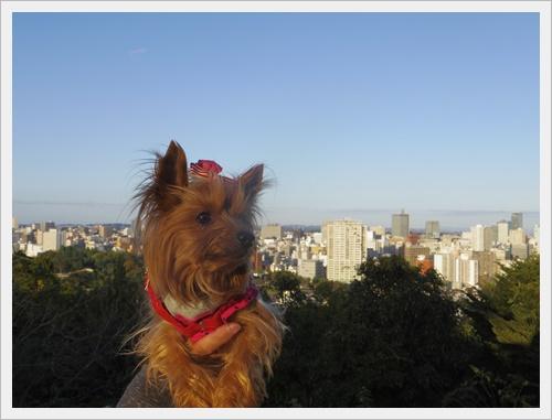 東北旅行IMGP4983-20120102