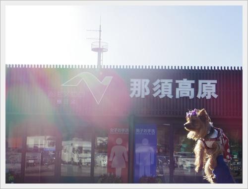 東北旅行IMGP4992-20120103