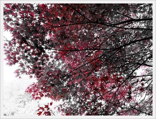 香嵐渓IMGP5043-20120101