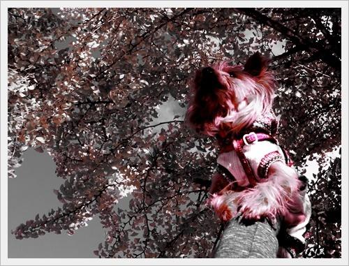 香嵐渓IMGP5053-20120101