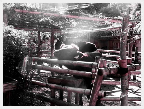 香嵐渓IMGP5056-20120101