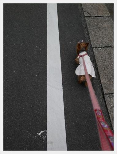 散歩IMG00168-20161111