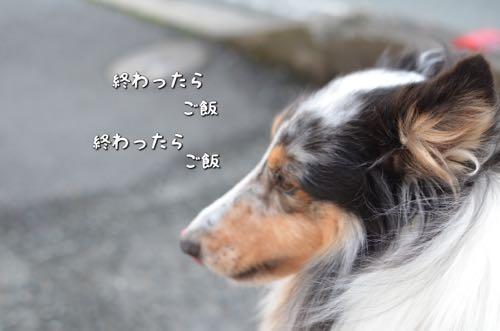 IMG_9274.jpg