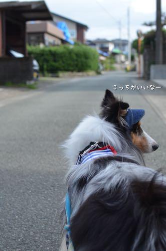 IMG_9904.jpg