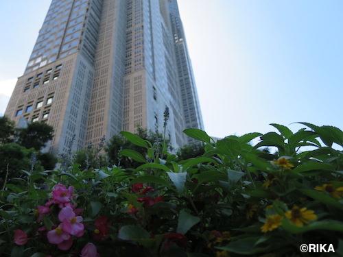 flower2-31/08/16
