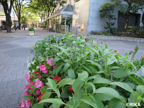 flower3-31/08/16