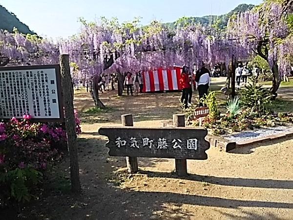 4月30日和気町藤公園