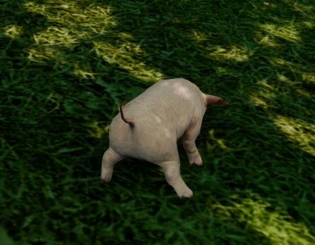 10月24日子豚のおちり