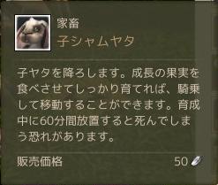 11月4日子シャムヤタ