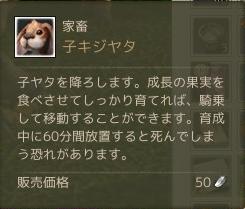 11月4日子キジヤタ