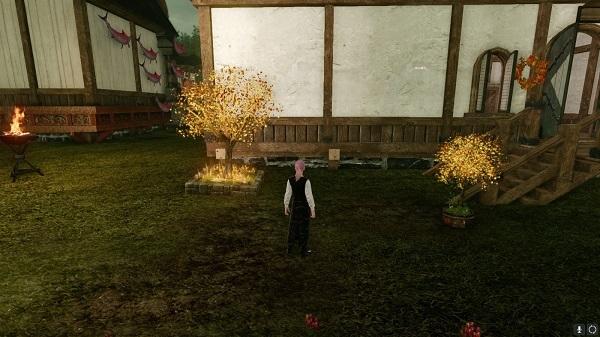 11月11日イベントの植木