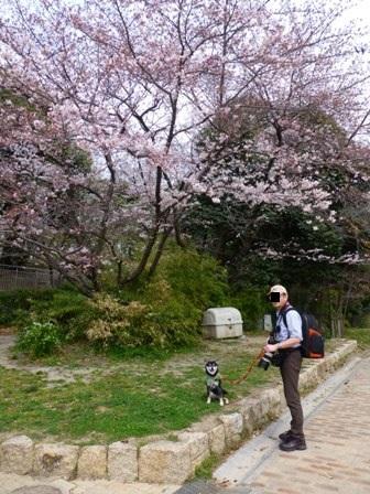 紫金山公園13