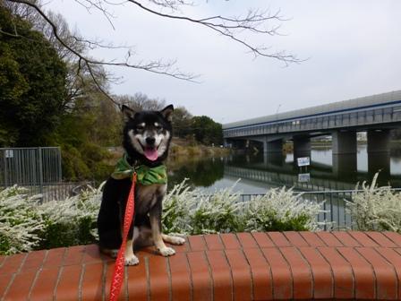 紫金山公園15