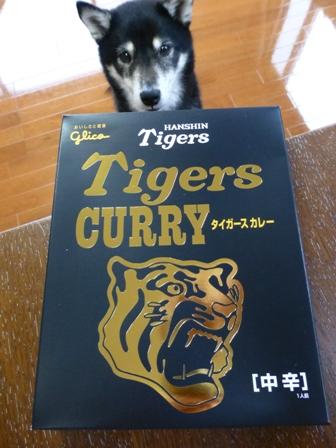 タイガースカレー1