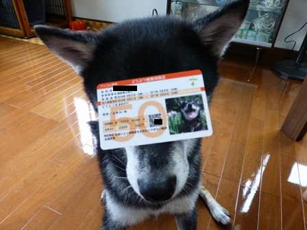 アニコム2016損保のペット保険3