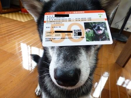 アニコム2016損保のペット保険7