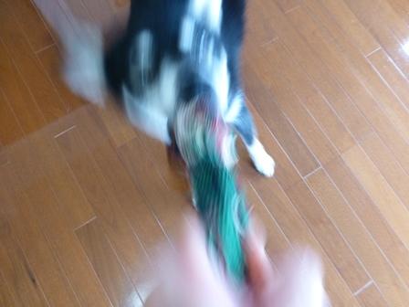 New! アミーゴ46
