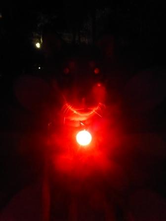 アンチノールのお散歩ライト21
