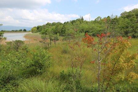 三重県上野森林公園6