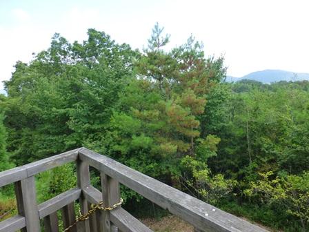 三重県上野森林公園28