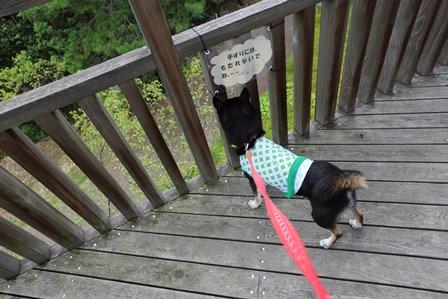 三重県上野森林公園30