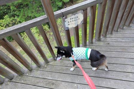 三重県上野森林公園31