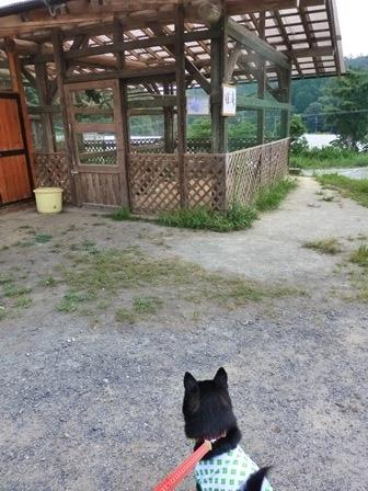 山田牧場11
