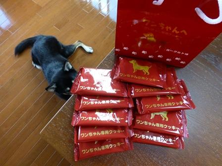 ワンちゃん専用クッキーヨーグルト味 (9)