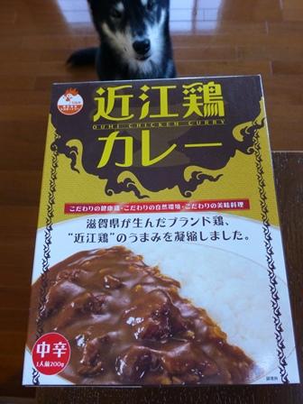 近江鶏カレー1