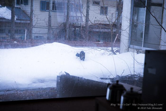 白樺湖グランドホテル_猫とカラス