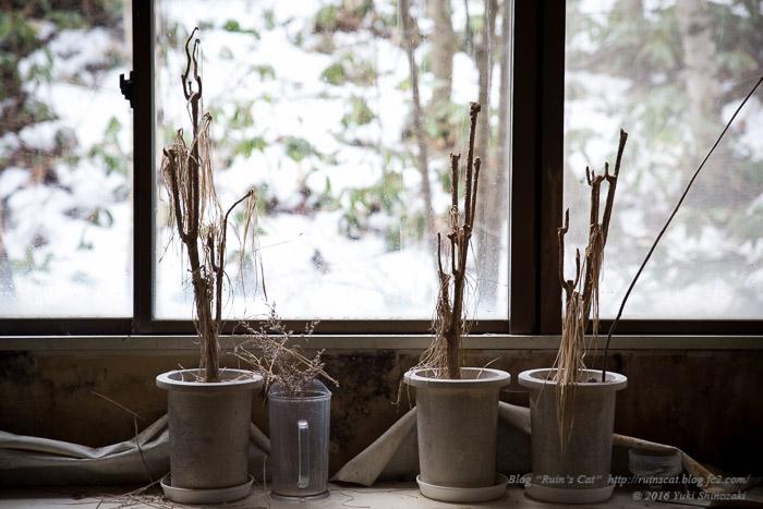 白樺湖グランドホテル_窓辺の植木鉢